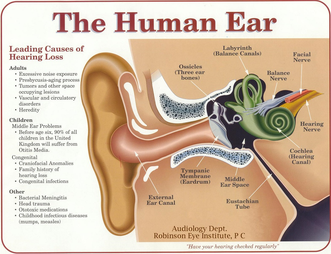 Ear Diagrams Essentials Psychology - Block And Schematic Diagrams •